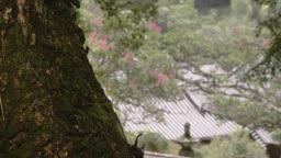전남 순천 송광사 나무 위 기어가는 장수풍뎅이