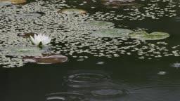 전남 순천 송광사 비 오는 연못 풍경