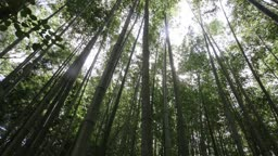 전남 순천 대나무 숲 풍경