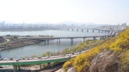 서울 응봉산에 활짝 핀 개나리와 한강 풍경