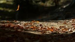 전남 순천시 낙엽 떨어지는 모습