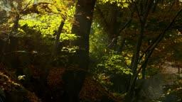 전남 순천시 송광사 낙엽 떨어지는 가을 풍경