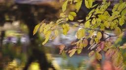 전남 순천시 바람에 흔들리는 나뭇잎 모습