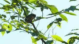 충북 충주시 하늘다람쥐 비행 모습