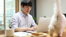 집에서 고양이와 함께 재택근무 하는 젊은남자 모습