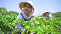 귀농귀촌 농사 밭에서 일하는 부부 모습