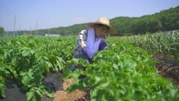 귀농귀촌 농사 밭에서 일하는 청년 모습