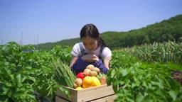 귀농귀촌 농사 밭에서 과일 채소 박스에서 감자 꺼내드는 젊은여자 모습