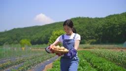 귀농귀촌 농사 밭에서 과일 바구니 들고 걷는 젊은여자 모습