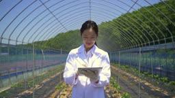 스마트팜 비닐하우스 걸어 다니며 태블릿피씨로 체크하는 연구원 모습