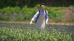 스마트팜 밭에서 농약치고 있는 청년 모습