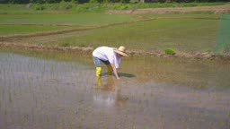 귀농귀촌 농사 밭에서 모종심기 하고 있는 청년 모습