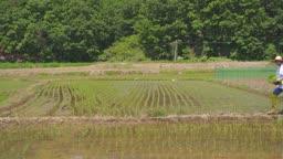 귀농귀촌 농사 밭에서 모종 들고 걷고 있는 청년 모습
