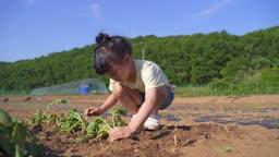 팜캉스 농촌 밭에서 일하고 있는 어린이 모습