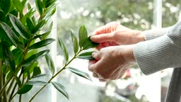 실버요양 나뭇잎을 만지는 할머니 손 모습