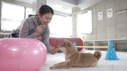 애견카페 강아지 유치원 훈련 시키는 조련사 모습