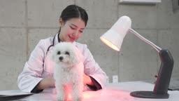 동물병원 강아지 진찰하는 수의사 모습