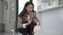 애견카페 강아지 목줄을 채우는 견주 젊은여자 모습