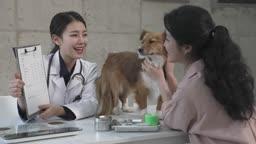 동물병원 강아지 진찰하는 수의사와 상담하는 견주 젊은여자 모습