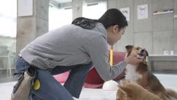 애견카페 강아지 유치원 강아지 상태 체크하는 조련사 모습