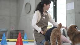 애견카페 강아지를 미소 지으며 돌보는 직원 모습