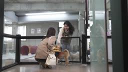 애견카페 강아지 유치원에 강아지를 맡기는 견주 젊은여자와 직원 모습