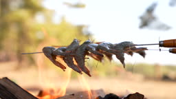 차박캠핑 불로 새우 굽는 모습